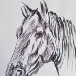 Horse Sketch Art Drawing By Bm Bundi Saatchi Art