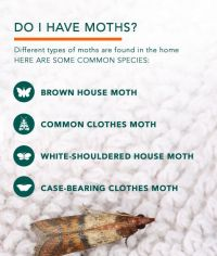 How To Get Rid Of Moths In Wool Carpet - Home Safe