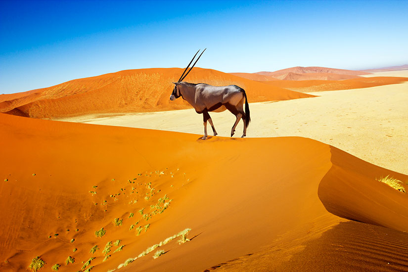 Image result for Dunes de Sossusvlei, Namibie