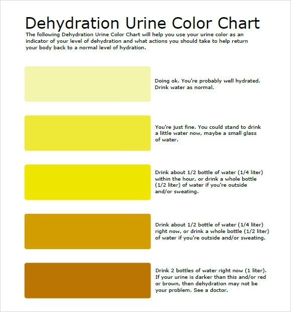 9+ Sample Urine Color Charts – PDF   Sample Templates