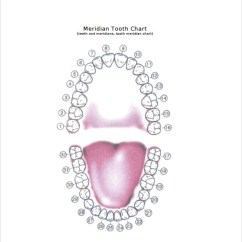 Diagram Of Mouth With Teeth Numbers Ge Dryer Wiring Online Sample Chart Template 10 Free Documents Download In Pdf Meridian
