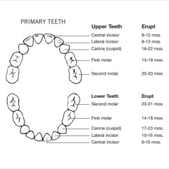 Diagram Of Mouth With Teeth Numbers Cbc Fishbone Sample Chart Template 10 Free Documents Download In Pdf Primary