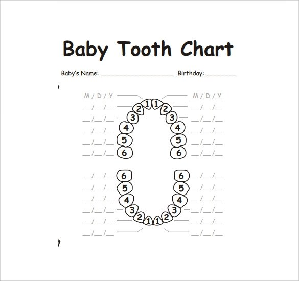 FREE 10+ Sample Teeth Chart Templates in PDF