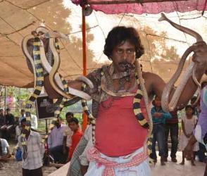 Photos : ડેન્જરસ સાપના ઝુંડ જોઈને ચક્કર આવી થાય, તેવો છે ભારતનો એક મેળો