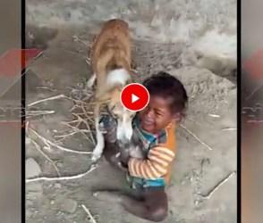 ગલૂડિયા માટે નાના બાળક અને કૂતરી વચ્ચે જામ્યો પ્રેમનો જંગ, જોઇ લો મજેદાર વિડીયો