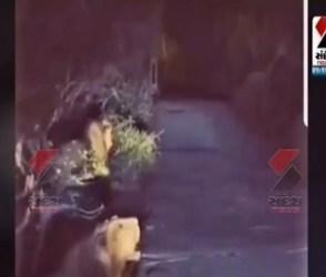 ગીર ગઢડામાં સિંહોનો ગર્જના કરતો જુઓ,  Viral Video