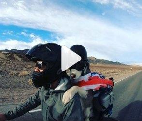 ધૂમ બાઇક પર કૂતરાનો સફર કરતો Video જોઇ તમારા ઉડી જશે હોશ