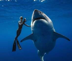 વિશ્વની સૌથી મોટી શાર્ક માછલી સાથે તરતી જોવા મળી મહિલા, વિડીયો વાયરલ