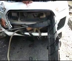 100ની સ્પીડે જતી કારના બોનેટમાં વાંદરૂ ઘૂસ્યું, પછી થઇ જોવા જેવી