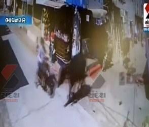 ભેંસોની રેસમાં યુવકો ઘવાયા, જુઓ ખતરનાક CCTV દ્રશ્યો