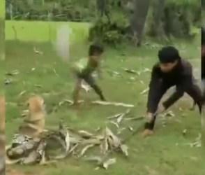 નાના બાળકોએ અજગરથી બચાવ્યો કુતરાનો જીવ, વીડિયો જોઈ તમે પણ ચોંકી જશો