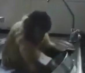 વાંદરાએ ધોયા વાસણ, વિડીયો જોઇને તમે પણ રહી જશો દંગ