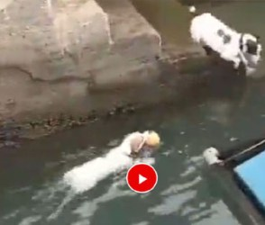 ગલૂડિયાએ પણ માલિકને ખુશ કરવા માટે કર્યું 'ચીટિંગ', જોઇલો આ વિડીયો