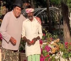 Video: ધર્મેન્દ્ર ખેતરમાંથી લાવ્યા બે બાલ્ટી ટમાટર, પછી પોતાના 'હીરો'થી કરાવી મુલાકાત