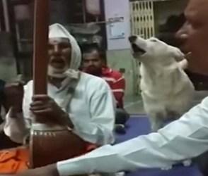 ભજન મંડળીમાં કૂતરાએ મીલાવ્યો સૂરમાં સૂર, સોશિયલ મીડિયા પર વાયરલ થઇ રહ્યો છે Video