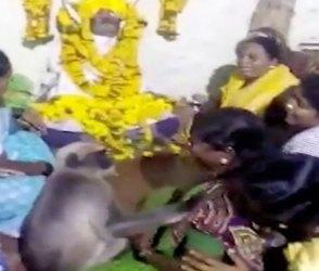 શોકસભામાં વાંદરો બન્યો લોકોનો સહારો, મહિલાઓના આંસુ લૂછતો ઇમોશનલ Video વાયરલ
