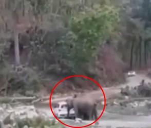 VIDEO: હાથીના કાફલાએ હાઈવે પર મચાવી ધમાલ, કાર પર કર્યો ખતરનાક હુમલો