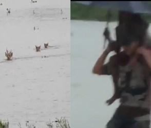 VIDEO: લોકોમાં ગભરાહટ, લાચાર પશુ, જવાનોની મદદ, આસામની સ્થિતિ જોઈ હદય કંપી ઉઠશે