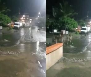 VIDEO: ધોધમાર વરસાદ વચ્ચે કુતરા-બિલાડાની જેમ એકસામટા આટલા સિંહો રસ્તા પર ભટકતાં હતા
