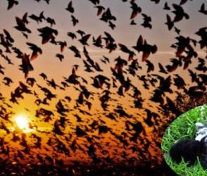 PHOTOS: દુનિયાની એકમાત્ર એવી ખીણ ભારતમાં કે જ્યાં આવીને પક્ષીઓ કરે છે આત્મહત્યા!