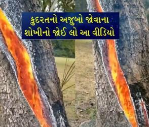 VIDEO: વીજળી પડતાં ઝાડ સોંસરવુ ચીરાયું અને આગ ભભૂકી, ક્યારેય ન જોઈ એવી ખોફનાક ઘટના