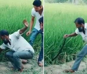 VIDEO: આ ભાઈ ઘાસમાંથી સાપ બહાર કાઢી કરામત બતાવતાં હતા, અંતે બધાનુ પોપટ થઈ ગયું