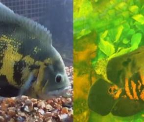 PHOTOS: ભારતની એક અજીબ માછલી, શરીર પર લખેલું છે 'અલ્લાહ'! લોકોએ લગાવી લાખોમાં બોલી