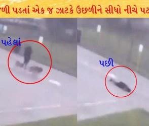 વીજળી પડવાનો ખોફનાક VIDEO: કૂતરાંને ફરવા લઈ જતા શખ્સ પર વીજળી પડતાં એક જ ઝાટકે….