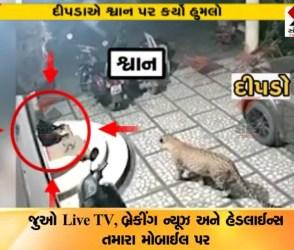 દીપડો અચાનક આવ્યો અને મોઢું ફાડી કૂતરાની બોચી પકડી લીધી, ખતરનાક હુમલો CCTVમાં કેદ