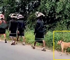 Video: આ કૂતરાની અનોખી શ્રદ્ધા જોઈ થઈ જશો હેરાન, 480 કિમીની પદયાત્રા કરી