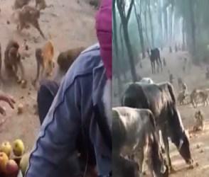 Video: સેવાધર્મ તો સરદારનો જ, અબોલ પ્રાણીઓ માટે કર્યું એવું કામ કે તમે પણ બોલી ઉઠશો વાહ
