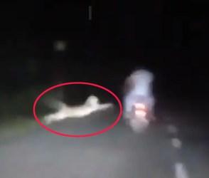 VIDEO: માત્ર એક સેકન્ડ અને બાઈકવાળા 'છે'માંથી 'હતા' થઈ જાત! દીપડો સહેજ નિશાન ચૂકી ગયો