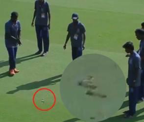 OMG! ચાલુ મેચ દરમિયાન ક્રિકેટ ગ્રાઉન્ડમાં ઘુસી ગયો સાપ, ખેલાડીઓ હાફડા-ફાફડા થઈ ગયા!