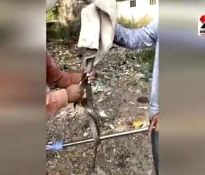 રાજકોટના પોલીસ ઇન્સ્પેકટરે બચાવ્યો ઝેરી સાપનો જીવ, જુઓ Video Viral