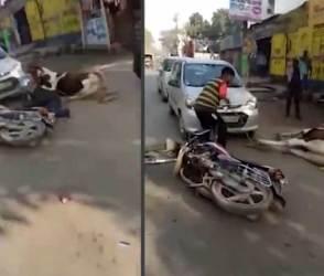 VIDEO: તબેલામાંથી ભાગેલા ઘોડાએ મચાવ્યો આતંક, રસ્તા પર બધાનો પરસેવો છોડાવી દીધો