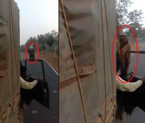 VIDEO: ગુસ્સો આવતા હાથી ભૂરાયો થયો, સુમસામ રસ્તા પર ટ્રક ડ્રાઈવરનો શ્વાસ અધ્ધર થઈ ગયો