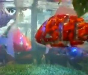 જાપાને શેર કર્યો રોબોટિક માછલીનો વીડિયો, લોકોએ ગુસ્સે થઈને નેક્સ્ટ લેવલની કોમેન્ટ કરી!