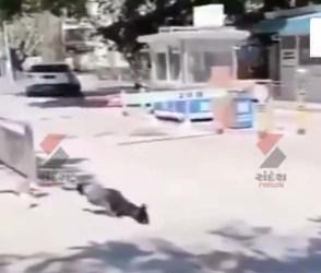 માત્ર બે પગ પર આ કૂતરાએ કર્યું એવું કામ કે જોઈ લોકોએ કહ્યું આ તો સાચો 'વિનર' છે…જુઓ Video