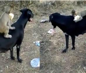 VIDEO: આનાથી વધારે ભાવુક બીજું શું હોય? કૂતરો અને વાંદરાનું બાળક બધાની આંખ ભીની કરી રહ્યા છે!