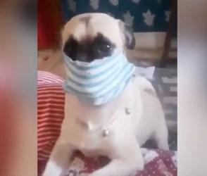 'જો પ્રાણી સમજી શકતું હોય તો, ભઈ તમે તો સમજુ છો', આ ડોગીની કરામતનો Video લોકોએ વખાણ્યો
