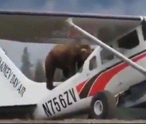 રીંછ એ વિમાનમાં ઉડવાની કોશિશ કરી અને પછી જે થયું…જુઓ Video