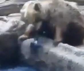 જીવના જોખમે રીંછે પાણીમાં ડુબી રહેલા કાગડાનો જીવ બચાવ્યો, Video જોઇને કહેશો વાહ…
