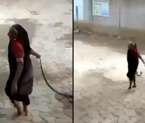 આ માજીની હિમ્મતને તમે પણ બિરદાવશો, કોબરા જેવા ઝેરીલા સાપ સાથે કર્યું એવું કે….જુઓ Video