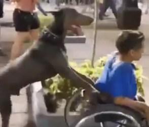 કૂતરાની વફાદારીનો પુરાવો છે વિકલાંગ માલિક સાથેનો આ Video, જોઇ તમે પણ કરશો સલામ