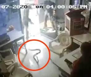 VIDEO: બોટલમાં પેટ્રોલ આપવાની ના પાડી અને શખ્સનો પિત્તો ગયો, ઓફિસમાં જઈને કોબ્રા સાપ છોડી દીધાં