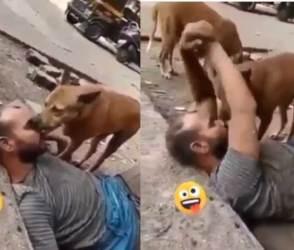 VIDEO: દારૂ પીને ટલ્લી થયેલા શખ્સને કૂતરું ચાટવા લાગ્યું, તો ગર્લફ્રેન્ડ સમજીને બાહોમાં લઈ લીધું