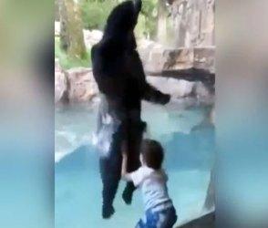 બાળકને કુદતુ જોઇ રીંછ ભાઇને યાદ આવી ગયુ બચપન, પછી તો જે થયુ…Video