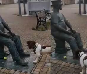કૂતરાની નિર્દોષતા ઈન્ટરનેટને મોહી ગઈ, મુર્તિ સાથેનો VIDEO જોઈ લોકો બોલ્યાં-'સો ક્યૂટ'