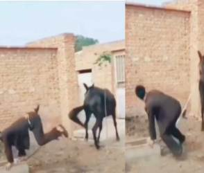 VIDEO: આ શખ્સની ઘોડા સાથે અજીબ હરકતો જોઈને લોકો બોલ્યાં-દુનિયામાં આવા કેટલાક છે