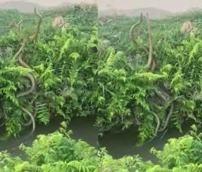 પાણીમાં બે સાપની આવી ખતરનાક ફાઈટ તમે ક્યારેય નહીં જોઈ હોય! VIDEO જોઈ લોકો ચોંકી ગયા!
